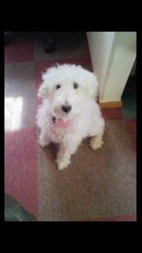 愛犬、モコ。